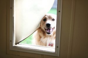 Are Your Energy Bills Affected by Pet Doors?