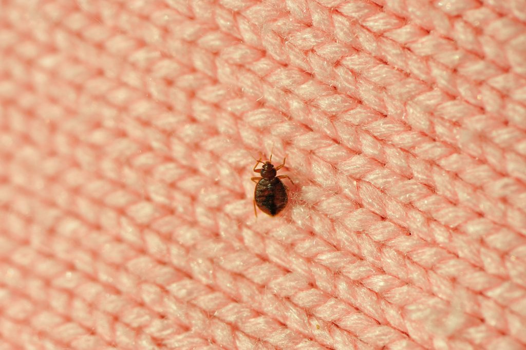 Air Ducts and Bed Bugs: How They're Related