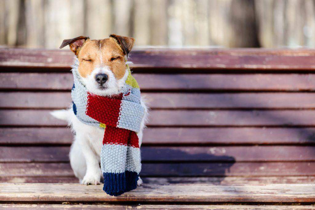 keeping pets warm in winter