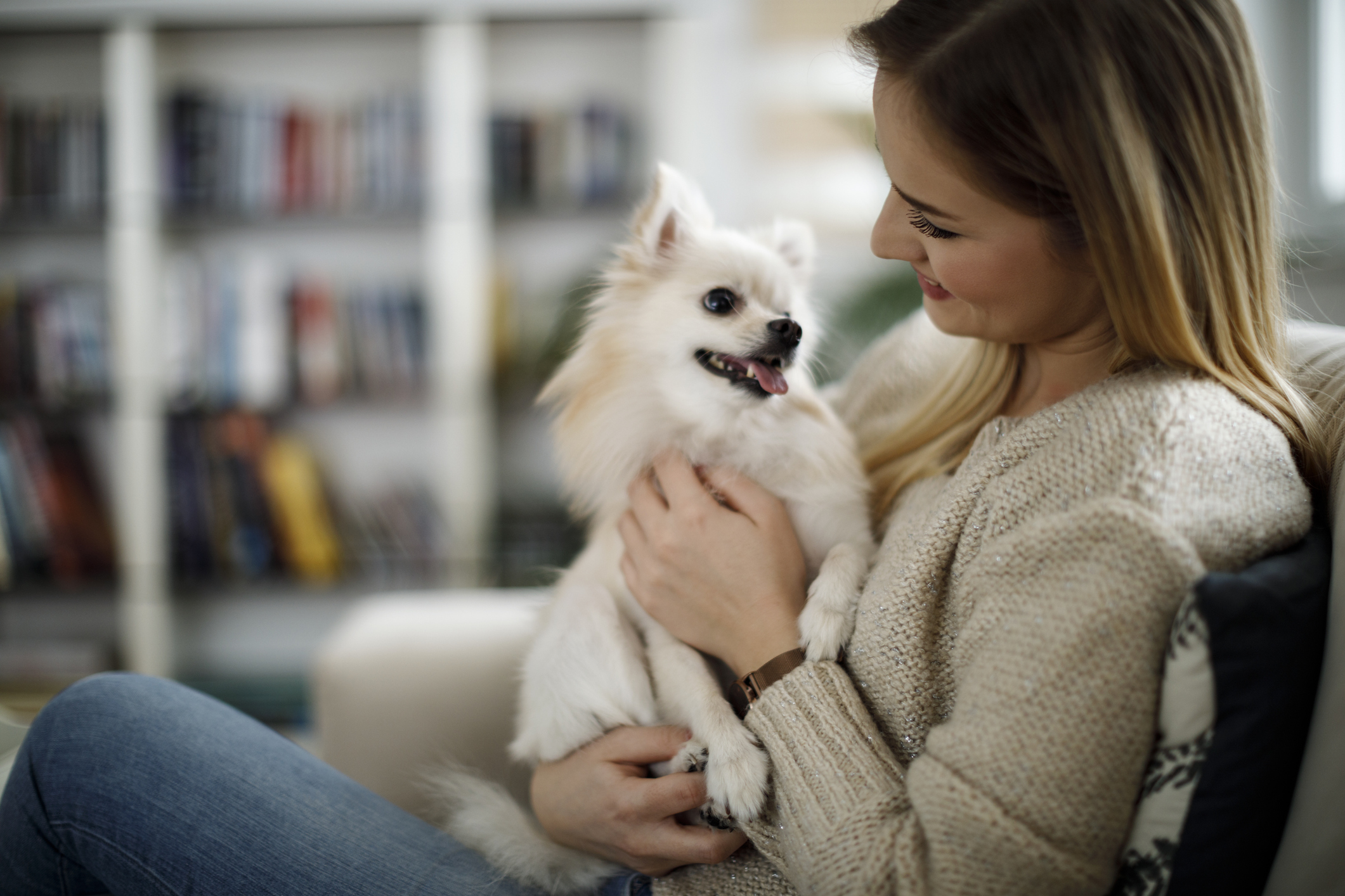 home comfort for pets