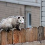 Ways to Protect Your Exterior HVAC Unit from Pests