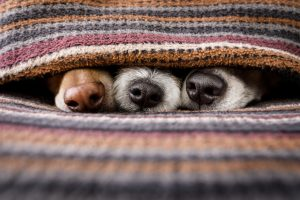 How to Create a Comfortable Home for Pets with Indoor Heating